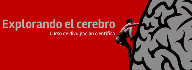 Explorando el Cerebro